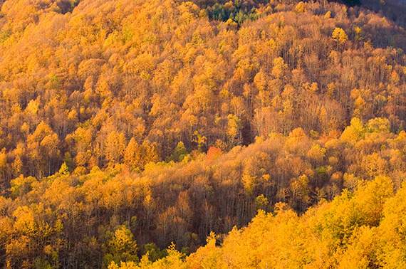 bosque_de_casentinesi_5649_570x
